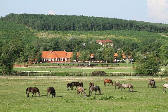 Lázár Lovaspark, Domonyvölgy