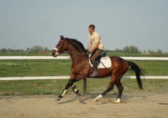 Bíbor Horse Lovasklub, Hajdúszoboszló