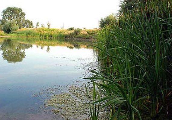 Újperinti tó, Újperint