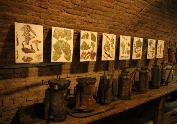 Bormúzeum, Szekszárd